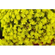 Quadros Decorativos Amarelo Quebra-cabeça 165 Peças