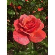 Quebra-Cabeça Cognitivo para Idosos - Rosas - 48 peças