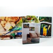 Quebra-Cabeça Pássaros Cognitivo Reabilitação para Idosos - Aves