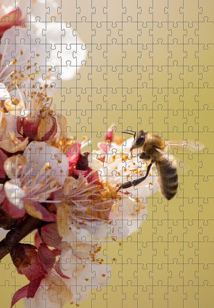Combo 2 quebra-cabeças cognitivo para idosos 60 peças - Abelhas