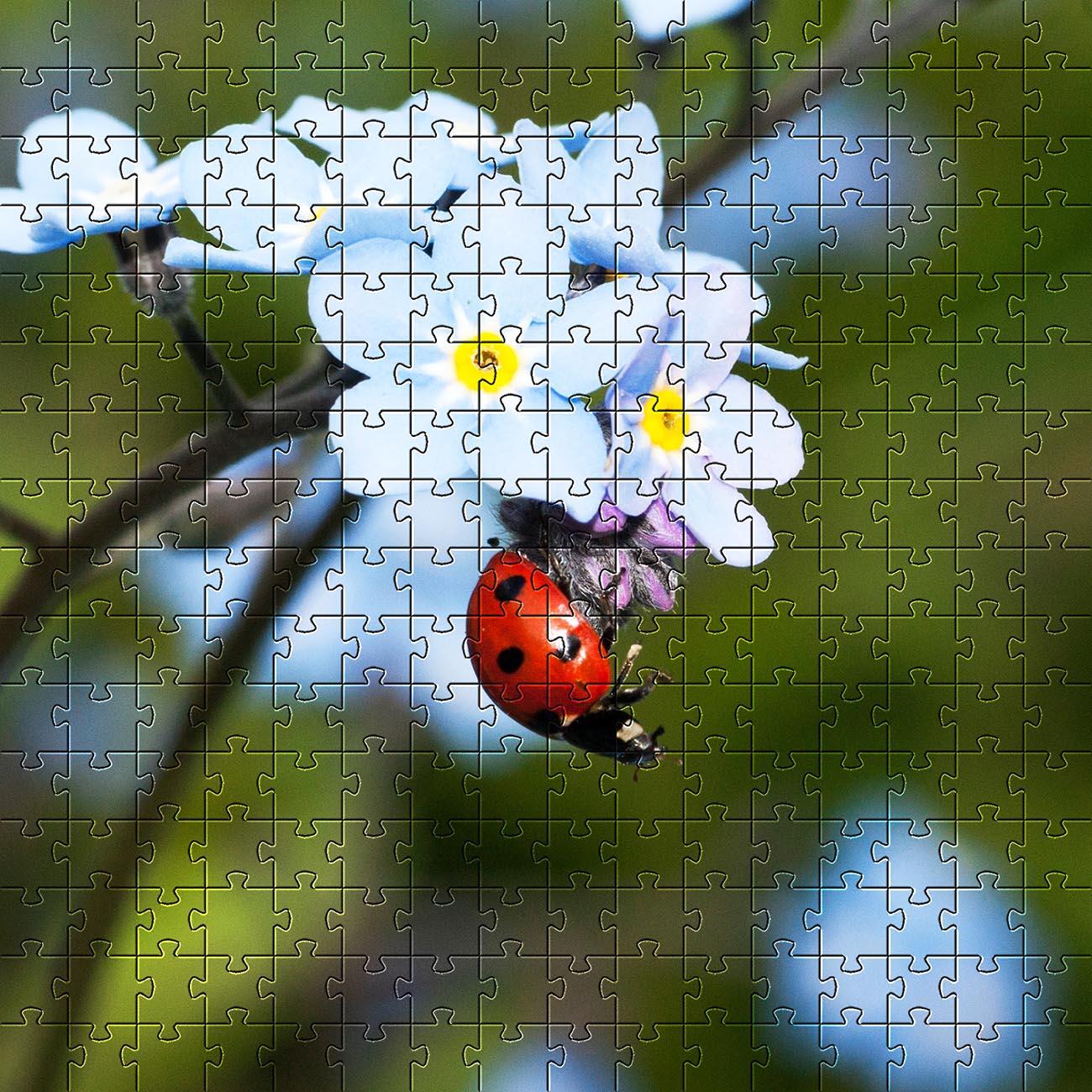 Kit 6 quebra-cabeças Vida de Inseto de 60 peças cognitivo para idosos