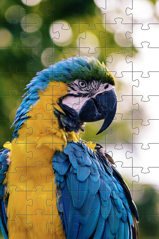 Quebra-Cabeça 48 peças  Reabilitação Cognitiva para Idosos Temas diversos