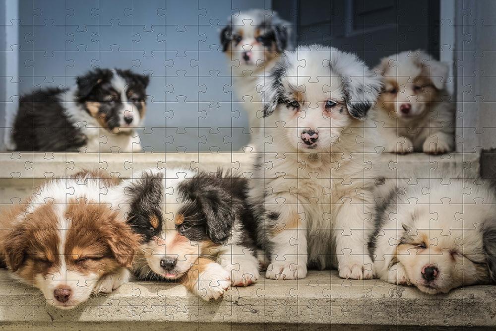 Quebra-Cabeça Cognitivo Reabilitação para Idosos - Cachorros 48 peças