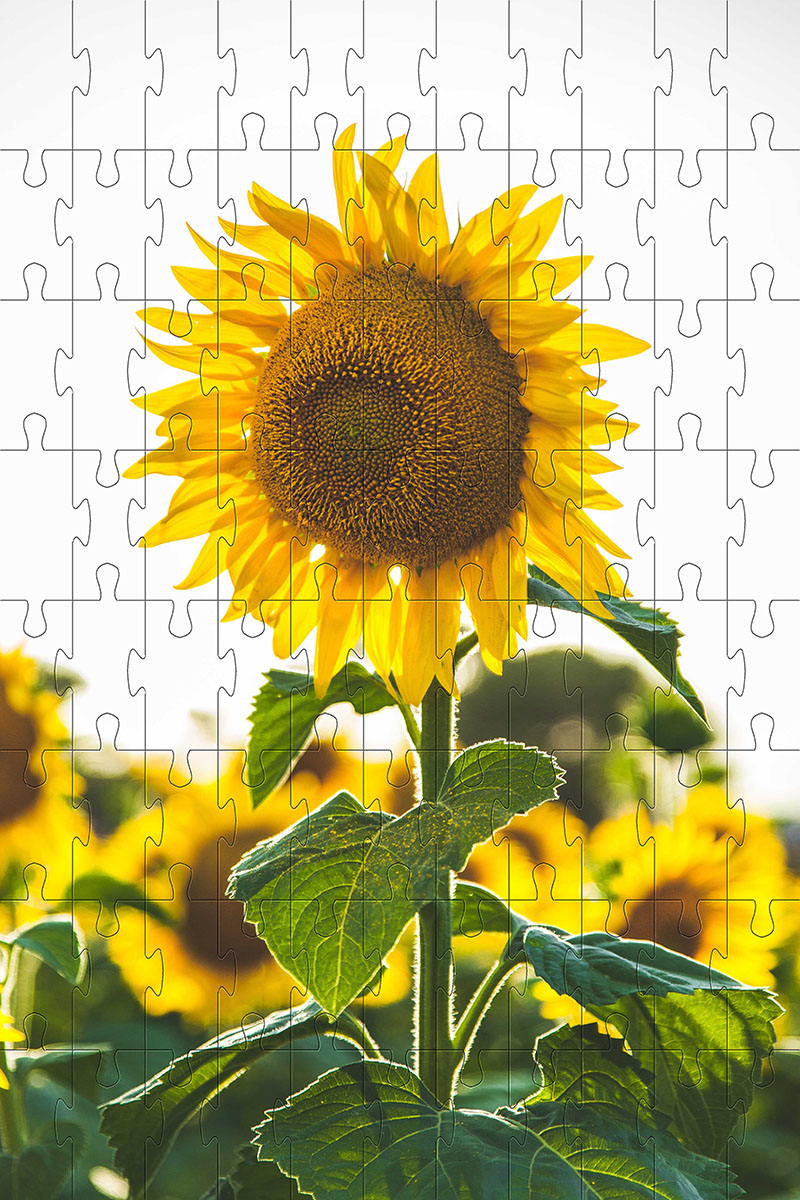 Quebra-Cabeça Cognitivo Reabilitação para Idosos - Flores