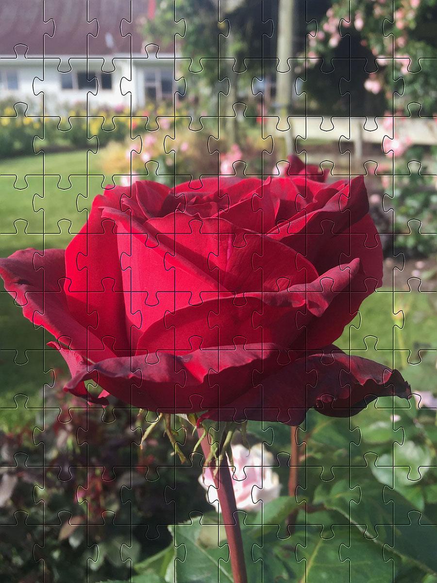 Quebra-Cabeça Cognitivo Reabilitação para Idosos - Rosas