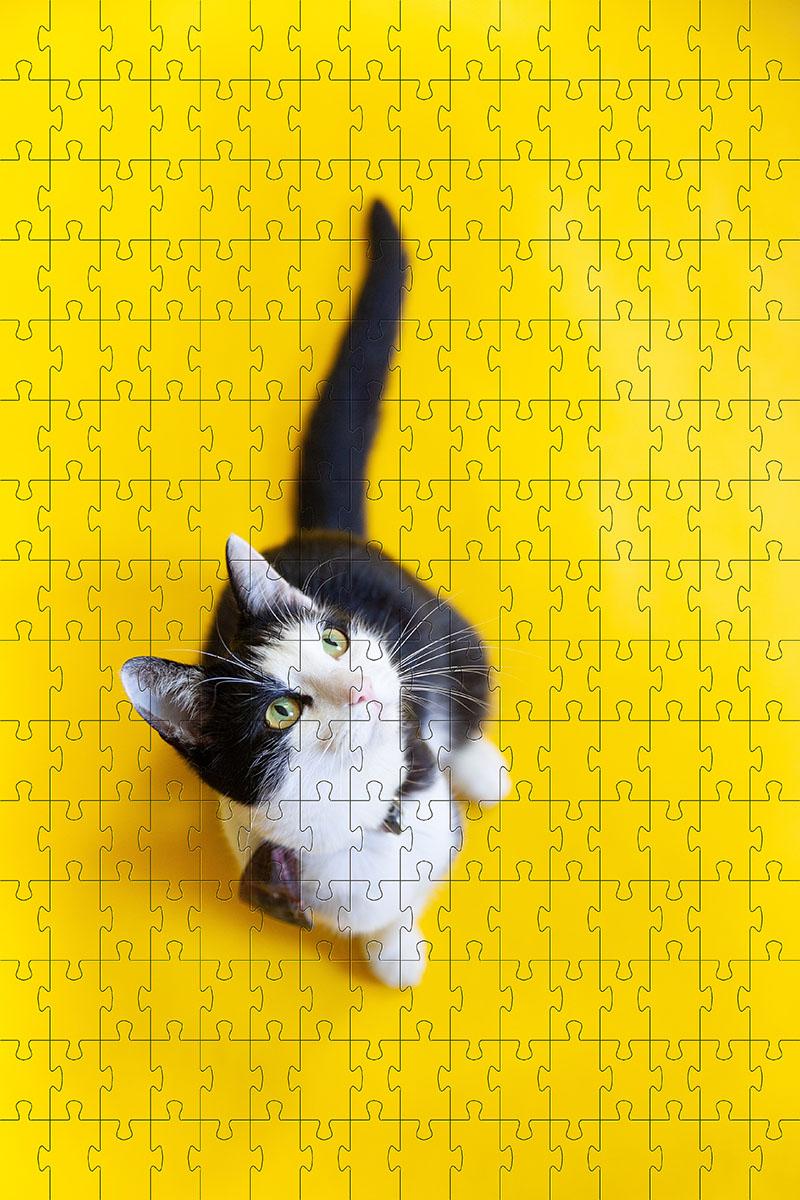 Quebra Cabeça Gato Vira lata de 300 peças MDL06 + Chaveiro