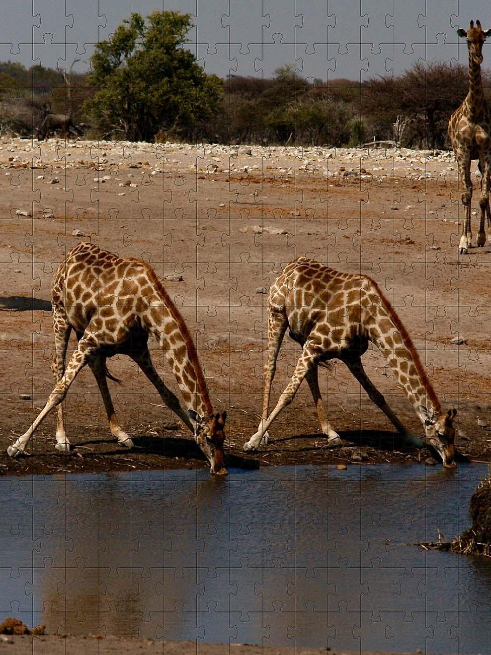Quebra-cabeça Girafas de 300 peças