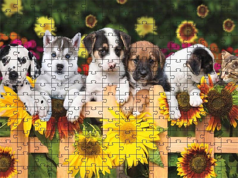 Quebra-cabeça Puzzle 300 peças Cachorrinhos e Flores