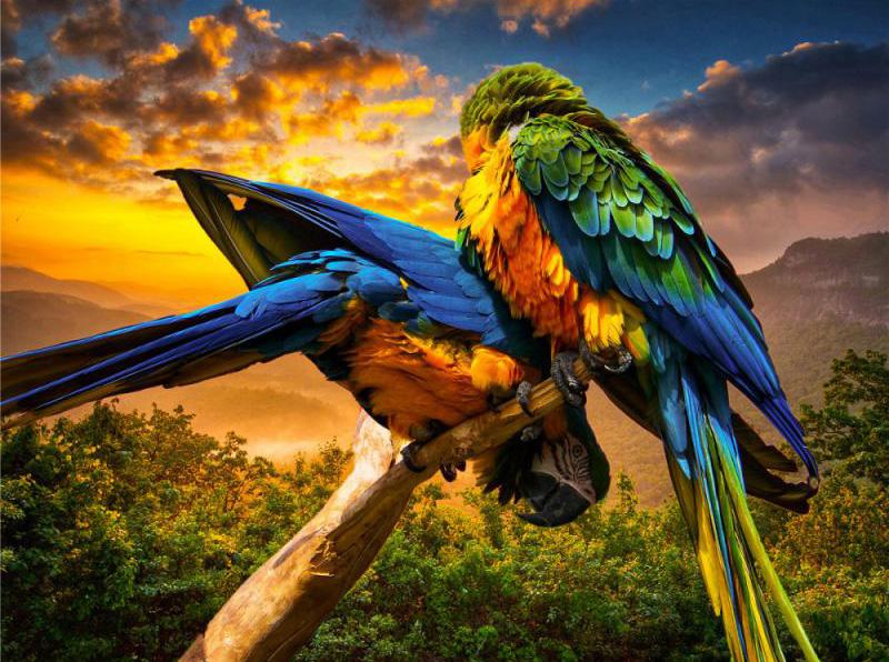 Quebra-cabeça Puzzle Pássaros Coloridos de 300 peças