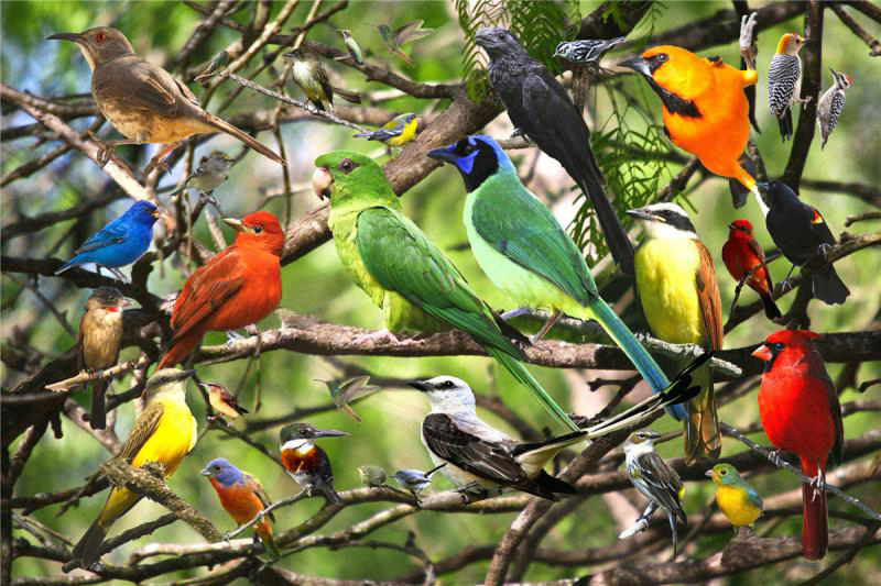 Quebra-cabeça Puzzle Revoada das Aves de 300 peças