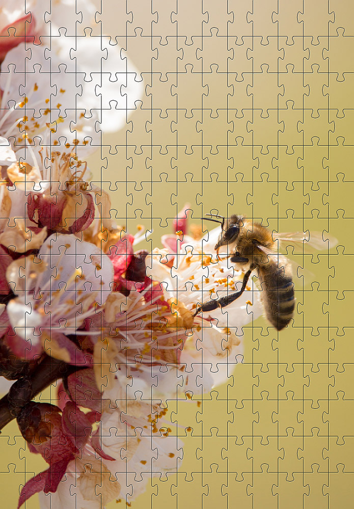 Quebra-cabeça quadro decorativo Abelhas de 300 peças
