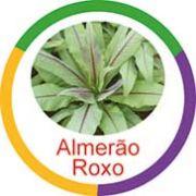 Ficha metálica de alimentos Almeirão Roxo