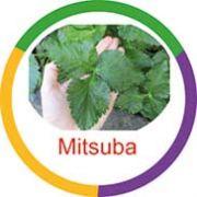 Ficha metálica de alimentos Mitsuba
