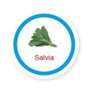 Ficha metálica de alimentos Salvia
