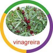 Ficha metálica de alimento  - Vinagreira