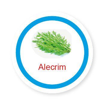 Alecrim  - Divertimente