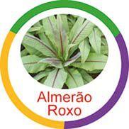Ficha metálica de alimentos Almeirão Roxo  - Divertimente
