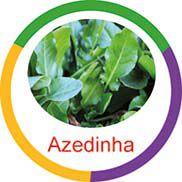 Ficha metálica de alimentos Azedinha  - Divertimente