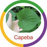 Ficha metálica de alimentos Capeba  - Divertimente