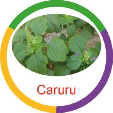Ficha metálica de alimentos Caruru
