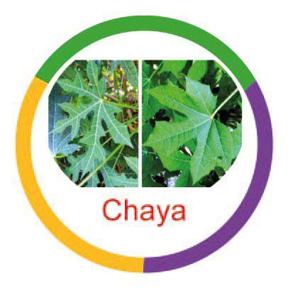 Ficha metálica de alimentos Chaya