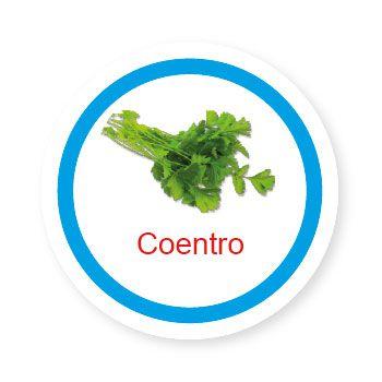 Ficha metálica de alimentos Coentro   - Divertimente