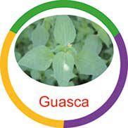 Ficha metálica de alimentos Guasca  - Divertimente