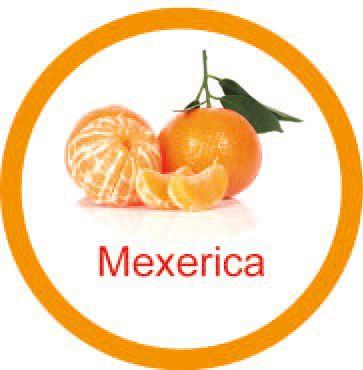 Ficha metálica de alimentos Mexerica  - Divertimente