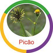 Ficha metálica de alimentos Picão  - Divertimente
