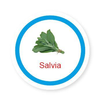 Ficha metálica de alimentos Salvia   - Divertimente