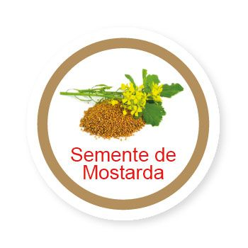 semente de Mostarda   - Divertimente