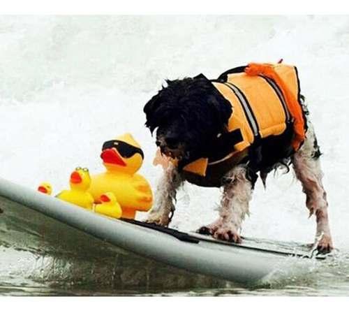 Colete Salva Vidas Para Pets Tamanho S - P