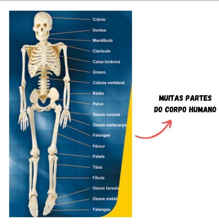 Quebra-Cabeça Corpo Humano  108 Peças Nig 285