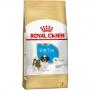 Ração royal canin cães filhote shih tzu