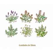DECALQUE COLOR HERBS - 50mm