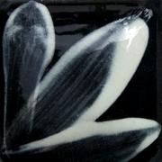 OS001 - WHITE (C)