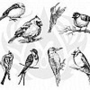 TELA DE SILKSCREEN - MOTIVO AVIARY - SMALL BIRDS (PÁSSAROS PEQUENOS)