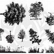 TELA PARA SILKSCREEN MOTIVO BOTANICAL TREE GRASS (ÁRVORES E ARBUSTOS)