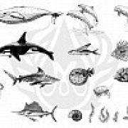 TELA PARA SILKSCREEN MOTIVO SEA LIFE 2 (VIDA MARINHA)