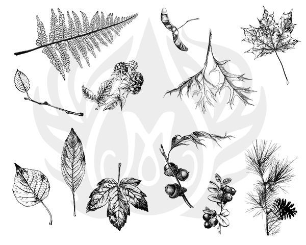 TELA PARA SILKSCREEN - BOTANICAL LEAVES