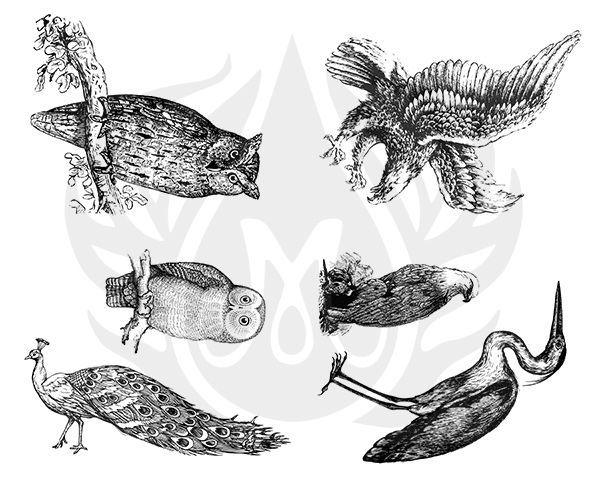 TELA PARA SILKSCREEN - MOTIVO: AVIARY LARGE BIRDS