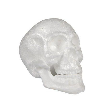 Cranio Com Mandíbula Articulável c/01 unidade