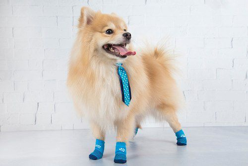 Meia Cachorro Antiderrapante Pet Socks Lulupo Colorida Lupo
