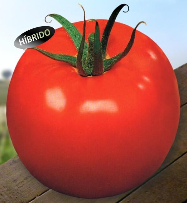 Semente De Tomate Hibrido Samuray 1mx - Tsv