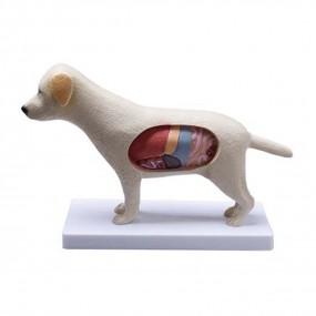 Anatomia do Cachorro - 3601