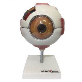Anatomia do Olho em 8 Partes