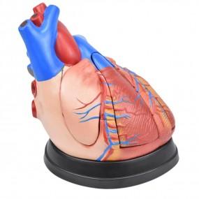 Coração em Tamanho Médio em 5 Partes