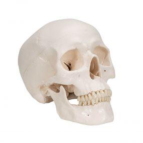 Crânio Clássico, 3 Peças