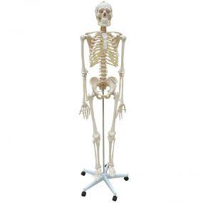 Esqueleto com Coluna Flexível E 168cm de Altura com Suporte