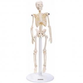 Esqueleto de 20 Cm